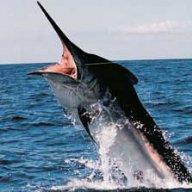 Miracle Marlin